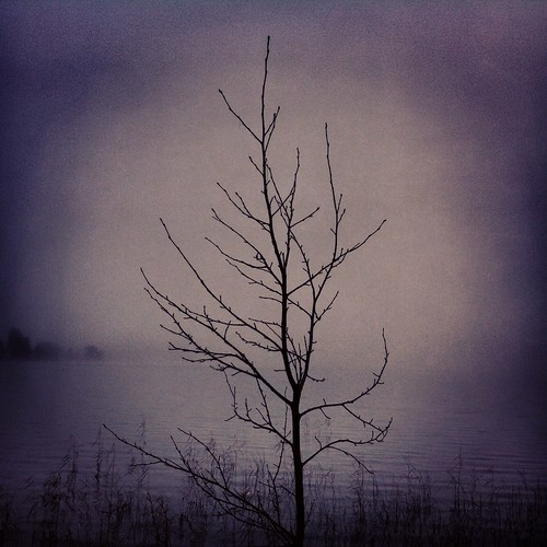 The Lonely Tree by the Misty Lake
