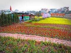 Hanoi . 6 a.m. freezing cold and then this ... (Marco Sarli) Tags: life street flowers lumix vietnam hanoi outofseason