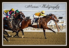 Fierce Boots (EASY GOER) Tags: horses horse snow ny cold sports racetrack race canon track competition racing aqueduct 7d athletes races sporting thoroughbred equine thoroughbreds