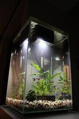 Neon Tetra tank (NHN_2009) Tags: fishtank neontetra fluval fluval66gallontank