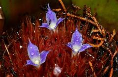 104_4651 (J Rutkiewicz) Tags: flower flora kwiaty ogrd
