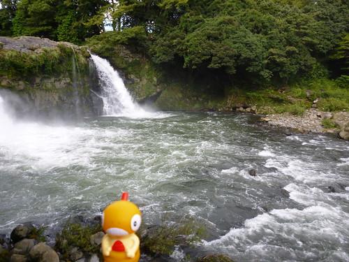 Scraggy in Susono, Shizuoka 20 (Goryu Falls)