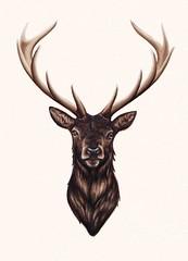 Reindeer Head Drawing Ink sketch stag drawing