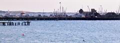 (mahler9) Tags: harbor provincetown capecod jaym macmillanwharf june2013 mahler9 andantecomodofotos