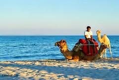 Tunisia 059 (Elisabeth Gaj) Tags: travel animals tunisia djerba afryka elisabethgaj vision:outdoor=099 vision:clouds=0719 vision:sky=0757 vision:ocean=0528