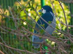 zoo de fort mardyck mars 2014