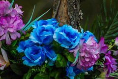 Muerte azul (Edwin.1997) Tags: muerte rosas azules moradas