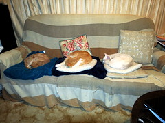 The Boys......Yes, their humans sit on the floor! (christineNZ2014) Tags: sleeping trooper alaska bailey theboys couchhogs nowheretosit nospaceforhumans humanssitonthefloor