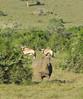 South Africa Luxury Hunting Safari - Beach 7