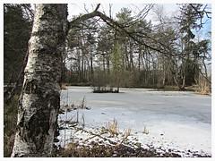 Étangs de Guin (Düdingen) (v8dub) Tags: étangs de guin düdingen schweiz suisse switzerland fribourg freiburg landscape paysage landschaft teich sumpf pond marsh natur nature bio biodiversité