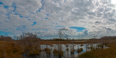 Grassy Waters Panorama (acarter5251) Tags: sky nature water grass clouds florida waters wetland grassy