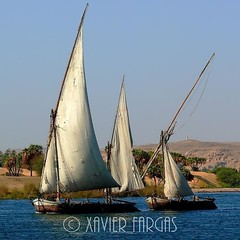 falucas y pescadores (Nilo) (www.xavierfargas.com) Tags: rio sailboat river boat barca fishermen egypt nile panasonic egipto nilo valero supershot 5photosaday xfp bej faluca dmcfz50 lumixdmcfz50 life~asiseeit spiritofphotography p1090585 ubej lesamisdupetitprince xavierfargas sailsevenseas
