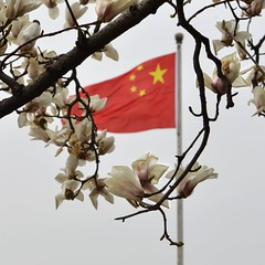 Magnolia (Solange B) Tags: china flowers fleurs spring branch flag chinese beijing magnolia chinois printemps chine drapeau branche pkin