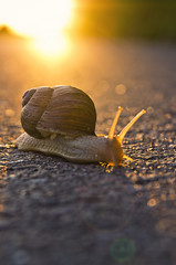 There is strength in serenity (Lars Kehrel) Tags: snail schnecke helixpomatia
