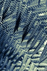 Standing inside the fern (cjuel) Tags: california fern woodside filoli thechallengefactory