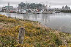 LaPushHarbor (NikonDigifan) Tags: ocean sea boats coast washington pacificocean pacificnorthwest wildflowers fishingboats woodenboats niksoftware viveza nikond300