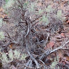 Mesquite, United States Of America