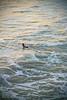 The Paddle (RyDizy) Tags: ocean life sunset man love water fun photography surf waves pacific manhattan surfer surfing manhattanbeach whitewash manhattanpier