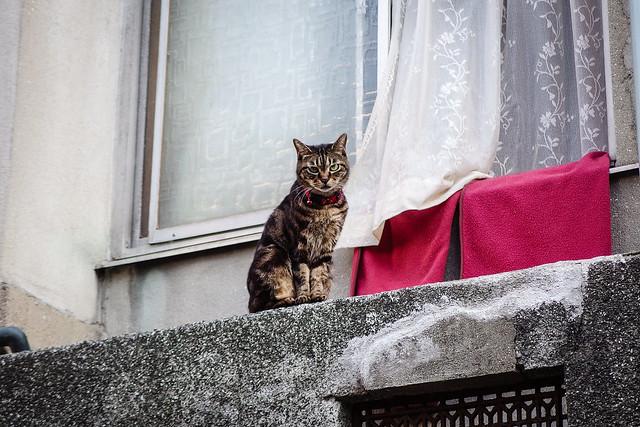 Today's Cat@2013-09-20