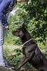 Canon 1.4 USM (Ryan O'Donoghue) Tags: wood dogs rose canon puppy lens woods collie husky girlfriend 14 knife sausage usm huskador