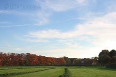 Autumn Harvest (Wim Zoeteman) Tags: autumn oktober fall grass october herfst harvest gras dehaar ruurlo oogst 2013 muldersweg