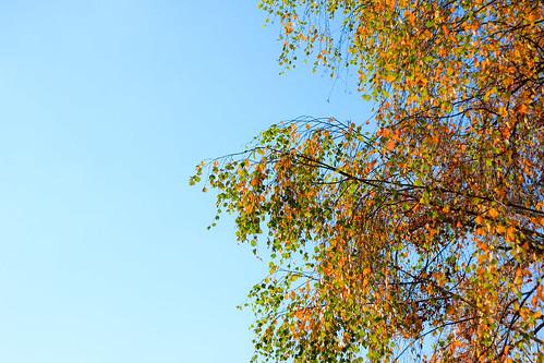Willkommen Herbst!