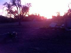 Sunrise (J. Nisly) Tags: sunrise cattle cows kansas 2012 brownswiss dairycattle