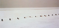 winter in holland (10) (bertknot) Tags: winter winterinholland
