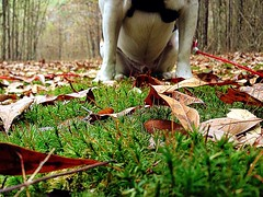 It's You and Me (marybethdodd15) Tags: trees winter sky dog brown white black cold green fall love beagle church nature grass leaves animals fun moss walk hunting trails jackson deer adventure trail bark ms wilderness bestfriend tracking beavers furr roaming pinelakechurch