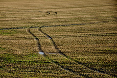 salty meadows (der zweite blick!) Tags: netherlands spur december salt thenetherlands meadow wiese lane land dezember niederlande salz katseveer zuidbeveland nederlande 2013 hinterdemdeich derzweiteblick nikond90 fahrspur wilhelminapolder andreasjurgenowski behindthedyke katscheveer der2teblick