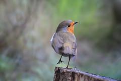 Robin, balancing