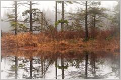 Winter Wetland -against the fog (TT_MAC) Tags: fog wetlands comoxbc lazomarshconservationarea
