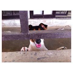 ผู้ต้องหาคดีเห่าเสียงดัง #dog #jack