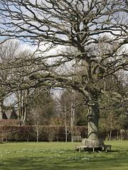 Spring (Nigel Musgrove-1.5 million views-thank you!) Tags: tree snowdrops