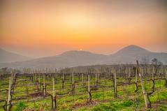 Le vigne al tramonto (tampurio) Tags: sunset sky italy panorama sun sunlight clouds sunrise landscape italia tramonto nuvole sony cielo tramonti sole paesaggi vigne paesaggio padova arquà monticelli arquàpetrarca slta58