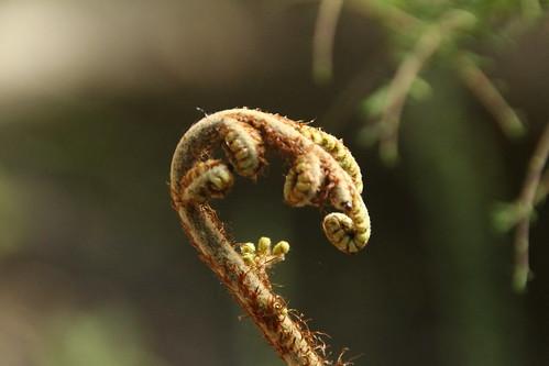 Flora im Abel Tasman Park