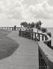 20140325 Pathway around Point Danger (Degilbo on flickr) Tags: pathway goldcoast diafine33 kodak400tmax mamiya6451000s pointdanger pandanustree epsonscannerv500 perfectphotosuite8minorglow