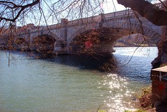 Rami.....Branches.... (Valter49) Tags: italy rio river torino italia fiume po valter valter49 mygearandme