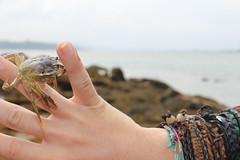 Explorndote (*Chaotic Soul*) Tags: sea summer mar hands crab manos galicia verano pontevedra cangrejo cambados