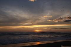 Un atardecer pacfico (Swans Fotografies) Tags: ocean sunset sea sun mer sol birds mxico atardecer soleil mar pacific pacificocean pajaros mexique crepusculo chiapas mexic crepuscule pacfico oiseaux oceano ocells ocan oce pacifique crepuscle capvespre oceanopacfico mxic soleilcouchant ocanpacifique bocadelcielo pacfic ocepacfic