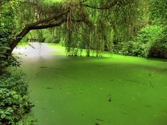 Green Lake in Tiergarten Berlin (Habub3) Tags: lake berlin green canon germany deutschland see powershot toll grn tiergarten g12 2015 oll habub3
