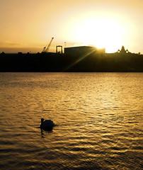 Early Morning, Roath Basin, Cardiff Bay (All I want for Christmas is a Leica) Tags: cardiffbay cardiff roathbasin sunrise dawn earlymorning water swans
