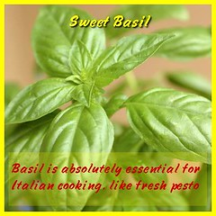 \u003C\u003C\u003CLIKE IT>>> Basil is the ultimate complement to tomatoes, and also pairs beautifully with onions, garlic, and olives. (moramo111) Tags: foods high healthy protein