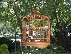 Bird in a Cage (elbrozzie) Tags: nyc newyorkcity manhattan lowereastside rooseveltpark