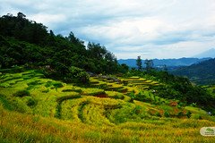Indonesian Terasering (Haekal Siregar) Tags: sunset mountain ricefield indonesian halimun