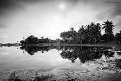 """A Mirror of Nature"" (tuan azizi) Tags: sky cloud sun white black reflection tree nature water mirror outdoor lee freeze scape simple calmness gnd 10stop nd1000 bigstopper tuanaziziphotography"