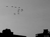 #30June 2013 Rebel  تمرد  #egypt (Sierragoddess) Tags: city flag military jets egypt trails cairo revolution egyptian planes rebellion contrails skywriting tahrir frommybalcony 2013