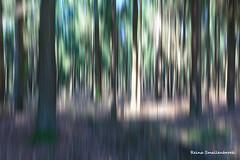 National Park De Hoge Veluwe (Reina Smallenbroek) Tags: trees bomen woods forrest bos veluwe nationalparkdehogeveluwe reintjedevos