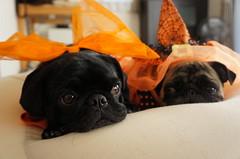 チラリと見る。 (e_haya) Tags: halloween sonynex5