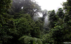 Simply amazing Costa Rica - Pura Vida! (Plorq.com // Yorran van der Slik) Tags: costa nature animals cake fog forest canon eos monkey amazing nevel turtle rica human vida enjoy beast pura humminbird 70300l 60d nevelwoud